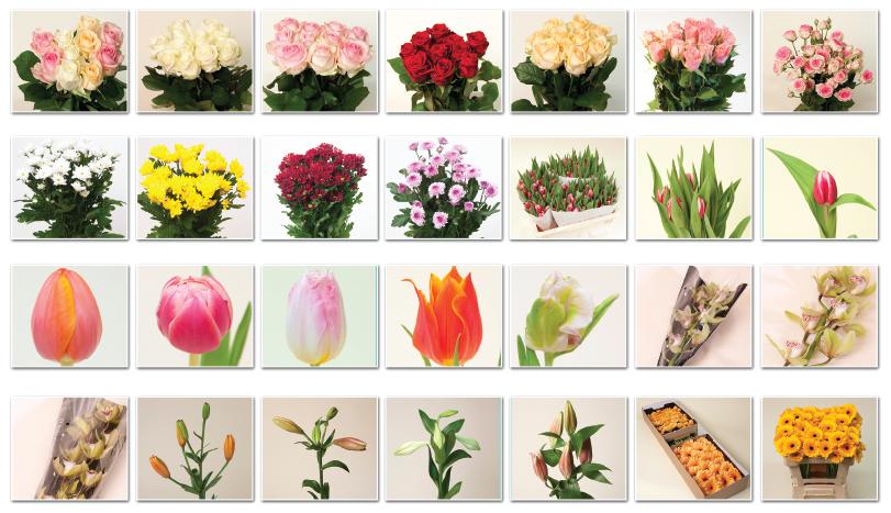 дополнит лофт цветы срезанные список по алфавиту с фото фотографий открытках